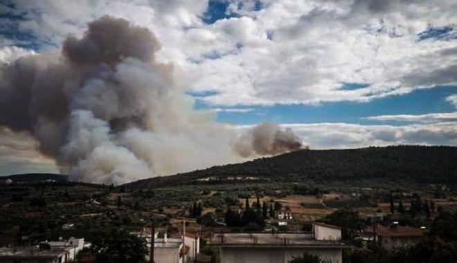 Πυρκαγιά στα Δερβενοχώρια του δήμου Τανάγρας