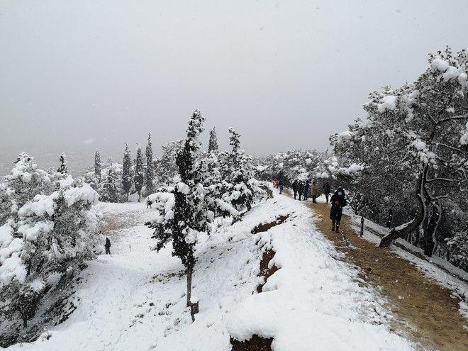 O λόφος του Στρέφη χιονισμένος