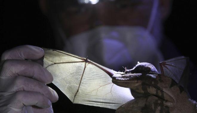 ΗΠΑ: Πέθανε από λύσσα ένα μήνα αφότου βρήκε νυχτερίδα στο δωμάτιό του