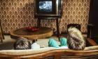 Δύο παιδιά παρακολουθούν τηλεόραση