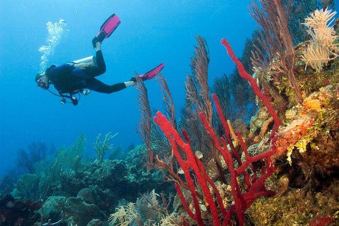 D0M5A4 Belize Scuba Diver
