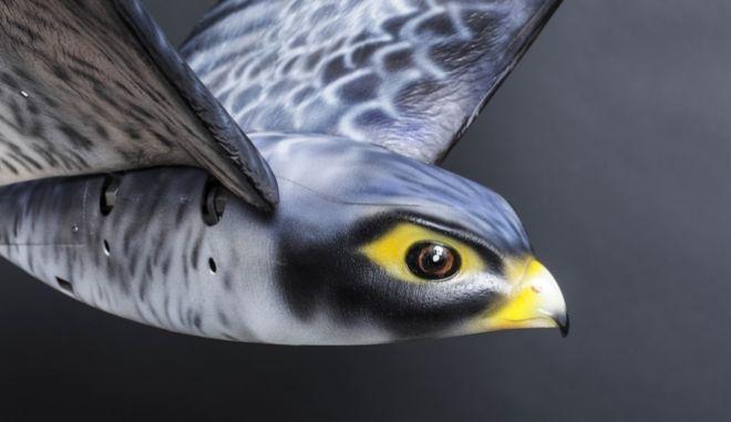 Aεροδρόμιο επιστράτευσε γεράκι-ρομπότ για να διώχνει τα πουλιά
