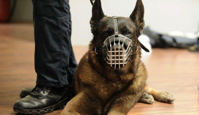 Σκύλοι στην υπηρεσία της αστυνομίας