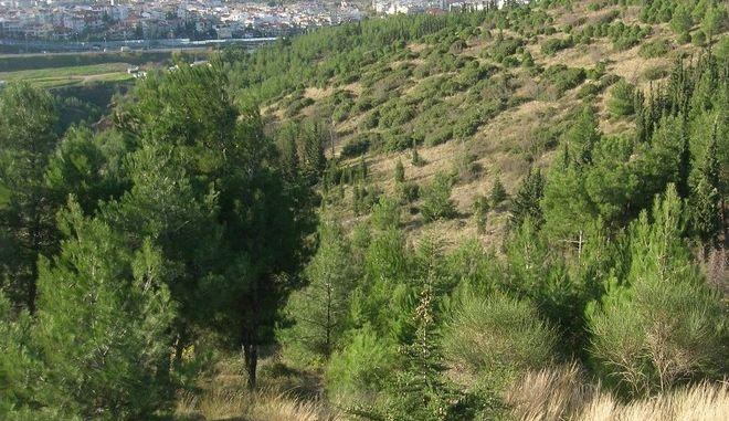 Το δάσος του Σέιχ Σου από τον Αρκτούρο