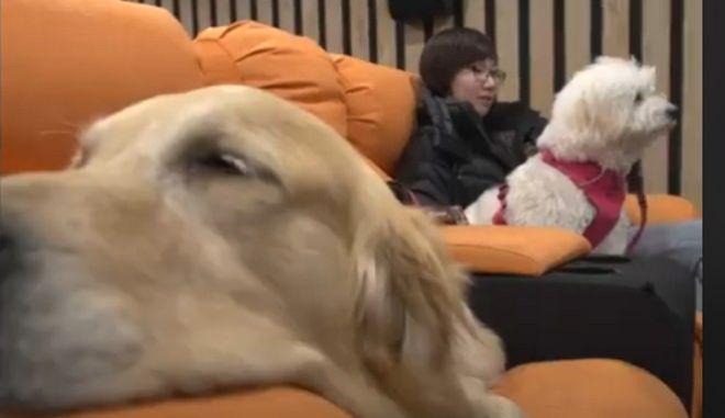 Δεν έχεις παρέα για να πας σινεμά; Τώρα μπορείς να πάρεις μαζί τον... σκύλο σου