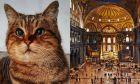 Η γάτα της Αγίας Σοφίας