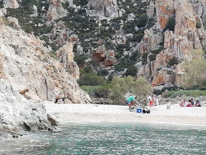 Τα αγριοκάτσικα στην παραλία