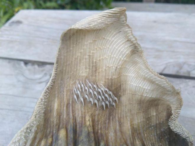 Το περίεργο πλάσμα που ξεβράστηκε σε παραλία της Ν. Ζηλανδίας
