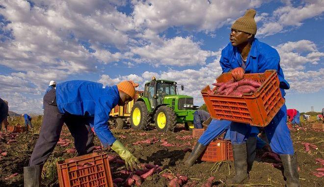 Σε συνθήκες 'δουλείας' εργάζονταν μετανάστες σε θερμοκήπια στην Ισπανία