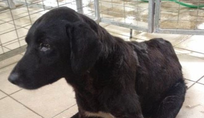 Λέσβος: Σακάτεψαν σκύλο με 40 σκάγια καραμπίνας