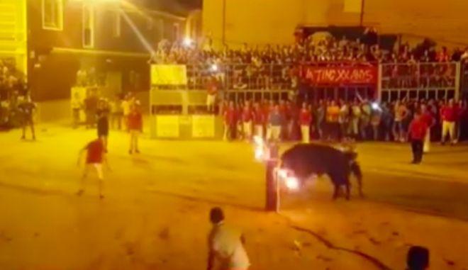Κτηνωδία σε ισπανική φιέστα: Ταύρος αυτοκτονεί αφού του βάζουν φωτιά στα κέρατα