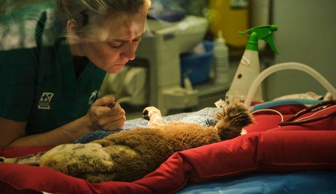 Ιρλανδική παμπ που έκλεισε λόγω lockdown μετατράπηκε σε νοσοκομείο άγριων ζώων
