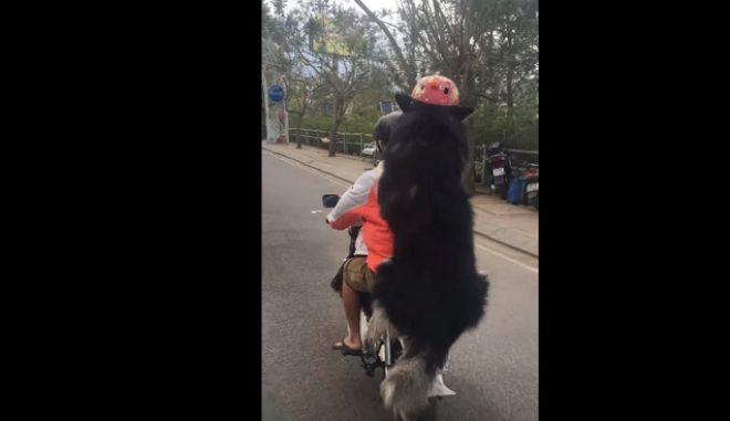 Μηχανόβιος σκύλος