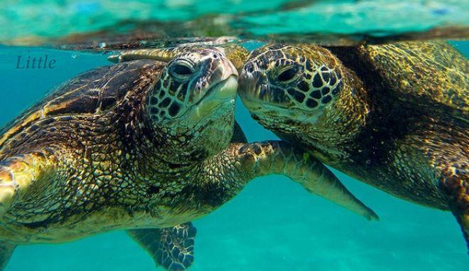 Εικόνες άγριας ομορφιάς: Δαμάζοντας τα κύματα