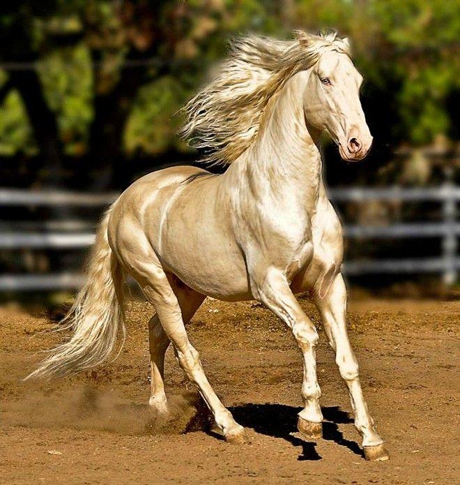Εκπληκτικές εικόνες: Θαυμάστε το πιο λαμπερό άλογο στον κόσμο