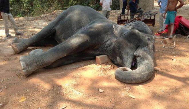 Πέθανε ελέφαντας που μετέφερε τουρίστες στους 40 βαθμούς Κελσίου
