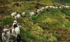 Πληρωμές σε 823 δικαιούχους βιολογικής κτηνοτροφίας
