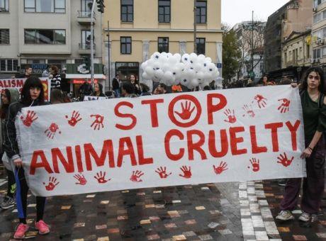 Ακτιβιστή για τα δικαιώματα των ζώων