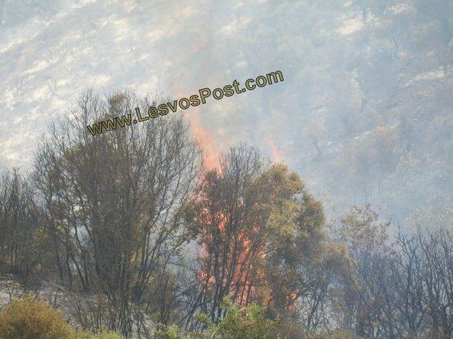 Μεγάλη πυρκαγιά ξέσπασε στον Προφήτη Ηλία Λέσβου