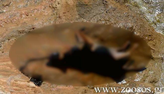 Κτηνωδία στην Πάρο: Πέταξαν σκύλο με πέτρα στο λαιμό στη θάλασσα