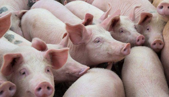 Έρευνα: 20 κτηνοτροφικές εταιρείες εκπέμπουν περισσότερα αέρια θερμοκηπίου από τη Γερμανία, τη Βρετανία ή τη Γαλλία