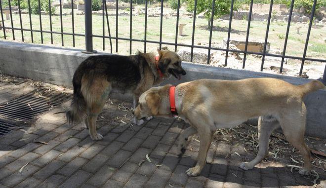 Δύο αδέσποτα σκυλιά