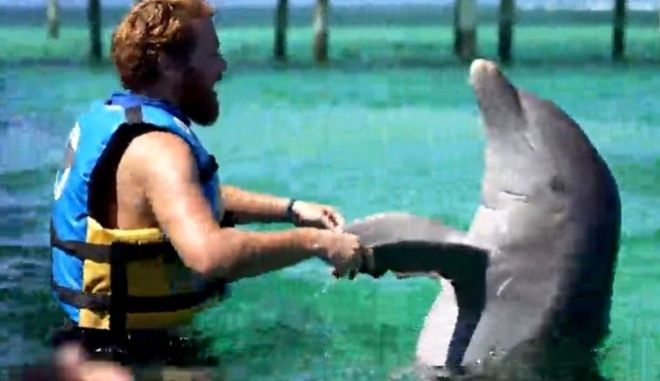 Survivor 4: Οργή για τα δελφίνια-έπαθλο