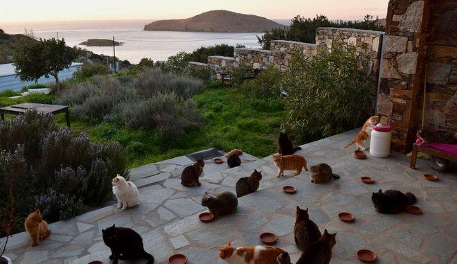 Πιάσε δουλειά στην Σύρο φροντίζοντας 55 γάτες