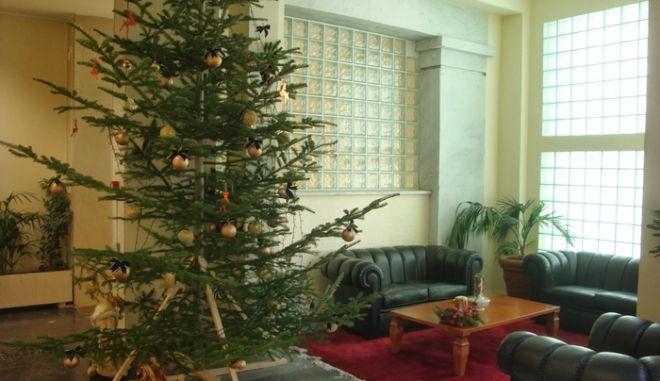"""Ξάνθη: """"Αποκεφάλισαν"""" δέντρο για να χωρέσει στο Δημαρχείο. Θα μπορούσαν απλά να το πάνε πιο δίπλα"""