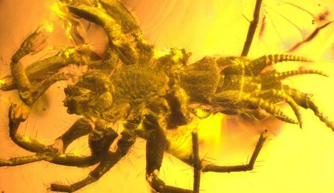 Βρέθηκε προϊστορική αράχνη 100 εκατ. ετών και έχει ουρά