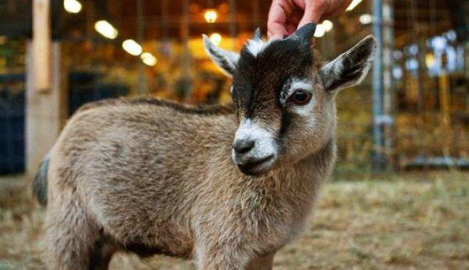 diaforetiko.gr : smallest animals13 Εκπληκτικές Φωτογραφίες: Ζώα μινιατούρες. Και όμως υπάρχουν!