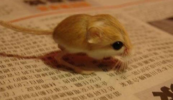 diaforetiko.gr : smallest animals9 Εκπληκτικές Φωτογραφίες: Ζώα μινιατούρες. Και όμως υπάρχουν!