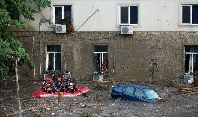 epa04798534 A handout picture provided by the Georgian Prime Minister's press office shows a runaway bear sitting on the window of the second floor of a building on the flooded street in Tbilisi, Georgia, 14 June 2015. At least eight people have died due to severe flooding in the capital of Georgia, local media reported. Portions of the city's zoo were destroyed, allowing many animals - including six tigers, six lions and eight bears - to break free of their enclosures and roam the streets of Tbilisi. Police have shot dead several animals over safety concerns, with six wolves killed at a children's hospital, according to broadcaster Rustavi 2.  EPA/BESO GULASHVILI/GEORGIAN PRIME MINISTER'S PRESS SERVICE/HANDOUT  HANDOUT EDITORIAL USE ONLY/NO SALES