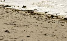 Μυστήριο στον Καναδά: Η θάλασσα ξέβρασε το 13ο ανθρώπινο πόδι σε παπούτσι