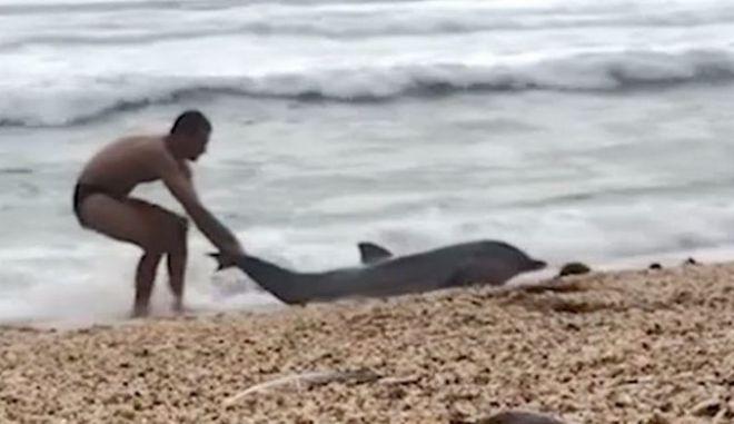 Η συγκλονιστική προσπάθεια ενός ανθρώπου να σώσει ένα δελφίνι