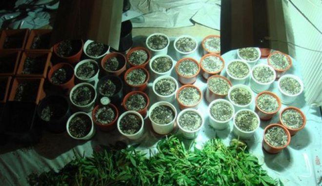 (Ξένη δημοσίευση) Συνελήφθη από Αστυνομικούς , στα Σπάτα Αττικής άνδρας ημεδαπός, ηλικίας 32 ετών, που είχε εγκαταστήσει μηχανισμό σε ακατοίκητη εξοχική κατοικία και καλλιεργούσε φυτά υδροπονικής κάνναβης , Τετάρτη 21 Ιανουαρίου 2009 .
