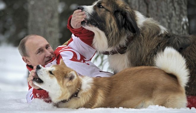 Russia's President Vladimir Putin lies on the snow during a walk with dogs in Moscow Region, March 24, 2013. Putin walked with Bulgarian shepherd and Akita Inu breeds of dogs, according to RIA Novosti news agency. Picture taken March 24, 2013. REUTERS/Alexsey Druginyn/RIA Novosti/Pool (RUSSIA - Tags: POLITICS ANIMALS TPX IMAGES OF THE DAY) ATTENTION EDITORS - THIS IMAGE HAS BEEN SUPPLIED BY A THIRD PARTY. IT IS DISTRIBUTED, EXACTLY AS RECEIVED BY REUTERS, AS A SERVICE TO CLIENTS - RTXYFZU