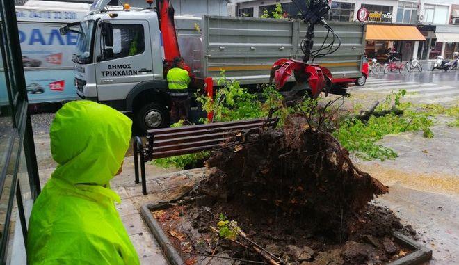 Πτώση δέντρου στα Τρίκαλα