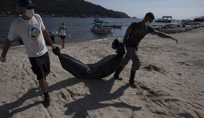 Άνδρες του λιμενικού ανασύρουν νεκρά δελφίνια από την ακτή - Φωτογραφία αρχείου