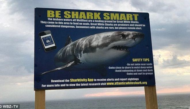Φρίκη στη Μασαχουσέτη: Καρχαρίας σκότωσε 26χρονο σέρφερ μπροστά στους λουόμενους