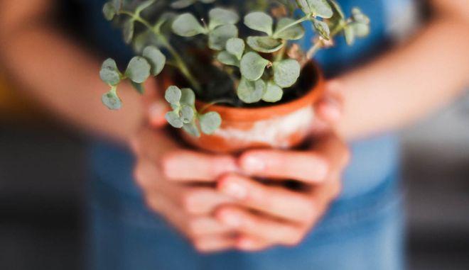 Γιατί τα οικολογικά προϊόντα είναι μονόδρομος