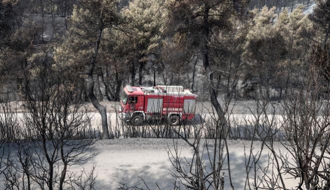 Η καταστροφική πυρκαγιά στην Εύβοια άφησε πίσω της χιλιάδες καμμένες εκτάσεις παρθένου δάσους