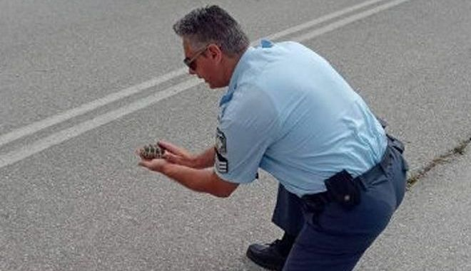 Υπάρχει και αυτή η ΕΛΑΣ - Αστυνομικός βοήθησε χελωνάκι να περάσει το δρόμο