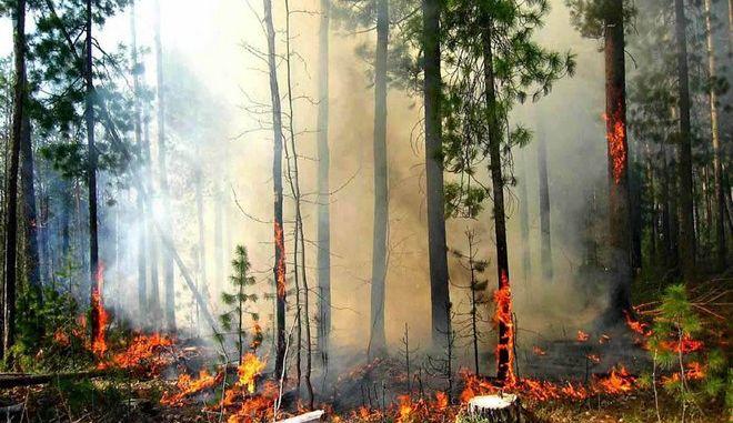 Δασικές φωτιές στην Ουκρανία