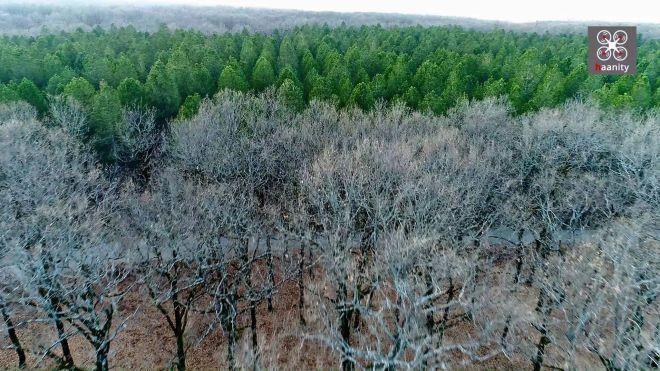 Η γη των Κενταύρων: Μέσα στο μοναδικό επίπεδο δάσος στην Ελλάδα με τις ιερές δρυς