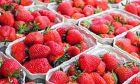 'Άγνωστοι τοποθέτησαν βελόνες σε φράουλες
