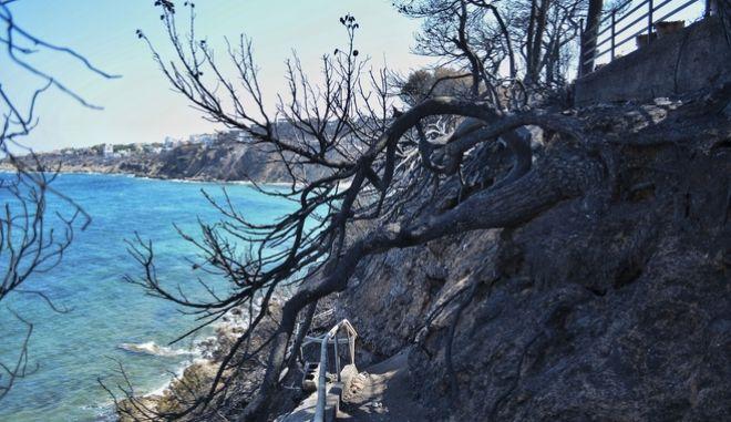 Εικόνες καταστροφής στο Μάτι Αττικής μετά τη φονική πυρκαγιά
