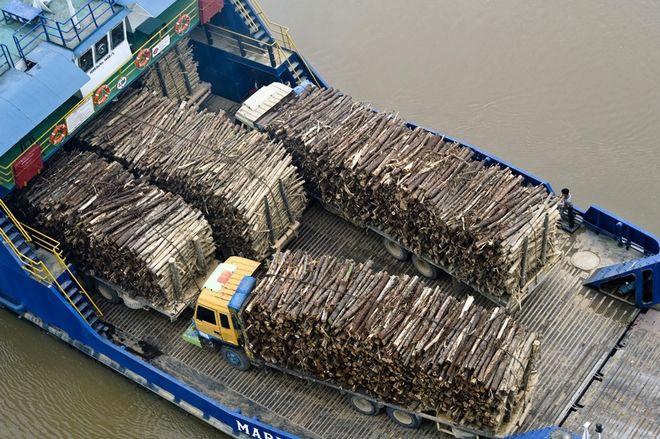 Ein Boot transportiert Akazienholz auf dem Siam Fluss, Provinz Riau, Sumatra, Indonesien. Akazien gehren zu den bei Papierproduzenten beliebten Holzarten, weil sie schnell wachsen und bald fr die Produktion gefllt werden knnen.