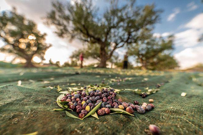 Η Ελλάδα ανέλαβε τον διακρατικό συντονισμό για τη Μεσογειακή Διατροφή το 2021
