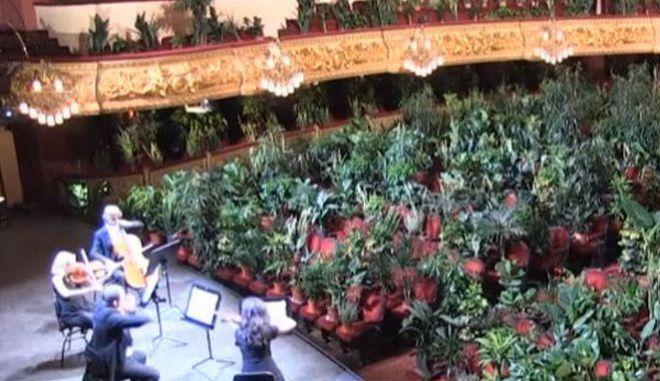 """Βαρκελώνη: Συναυλία με """"θεατές"""" 2.292 φυτά!"""
